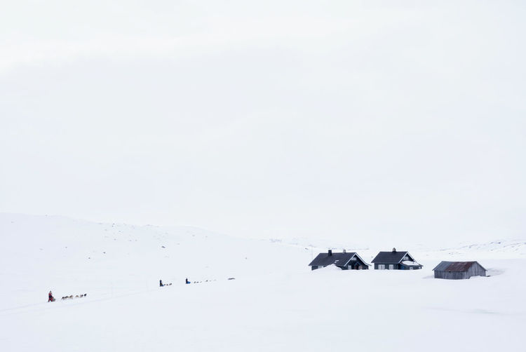 Dog sleds on the snowcovered mountain plateau Hardangervidda in Norway Adventure Animal Themes Beauty In Nature Cold Temperature Copy Space Day Frozen Idyllic Landscape Nature No People Outdoors Scenics Sky Snow Tranquil Scene Tranquility Weather Winter