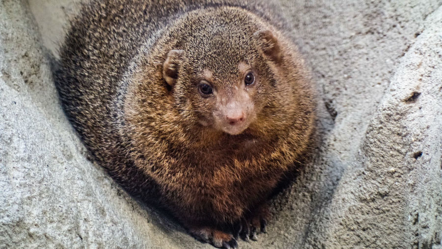 Animal Themes One Animal Animal Mammal Animal Wildlife Animals In The Wild No People High Angle View Close-up Vertebrate Rodent Brown Day Portrait Outdoors Looking At Camera Relaxation Looking Solid Nature Animal Head  Whisker