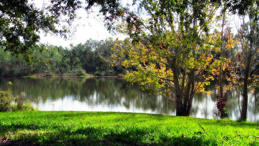 Grassy Bank Shadows Trees Colorful Leaves Lakeside Water Reflections Hazy Sky Fall Beauty Landscape Photography