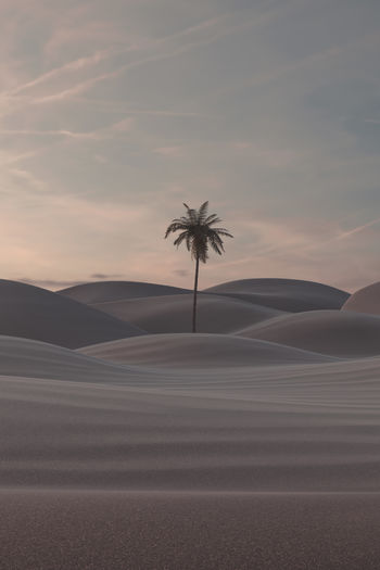 Palm trees on sand dune against sky during sunset