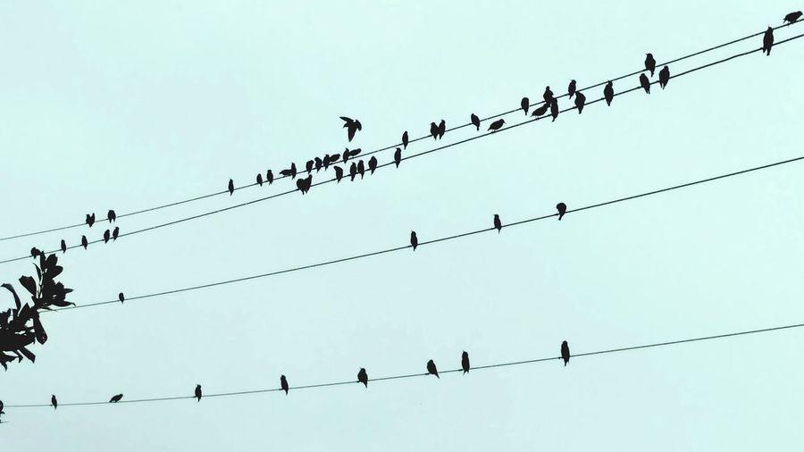 Birds Hangingout Bandoffriends Greymorning
