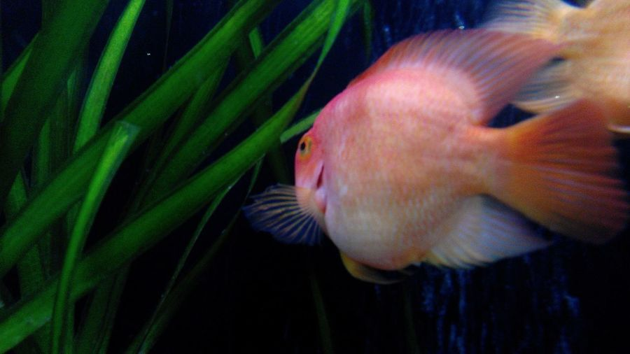 Aquarium Aquarium Life Aqua Water Fish Fishes Gold Fish Orange Fish Red Fish Plants Watter Plant Animals Animal Photography Subaquática