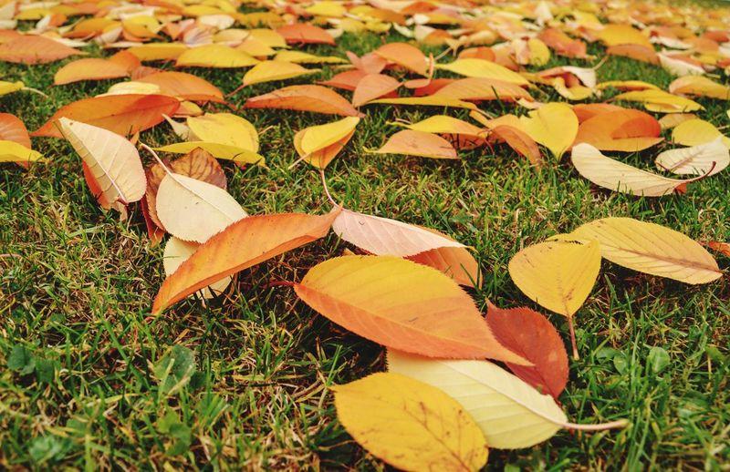 Take It Or Leaf