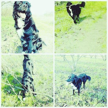 Dog Animals Love Leone