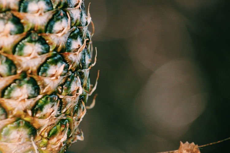 Pineapple Fruit Fresh Foodphotography Bokeh Bokehlicious Delicious Delicious ♡ Natural Light Darkness And Light Structures Structure And Nature Vitamins Healthy Healthy Food
