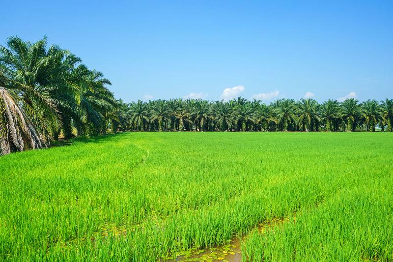 mix plantation