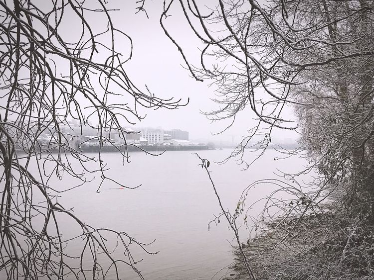 Tree Nature Water Tranquility Winter Snow France Loire