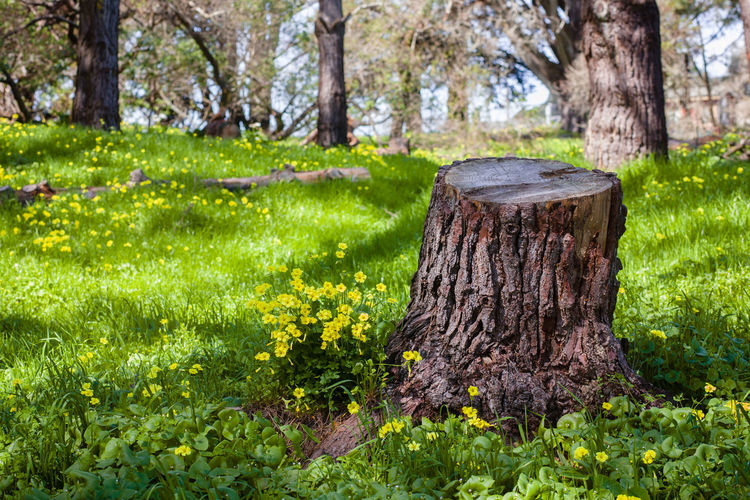Plants growing on tree stump in forest