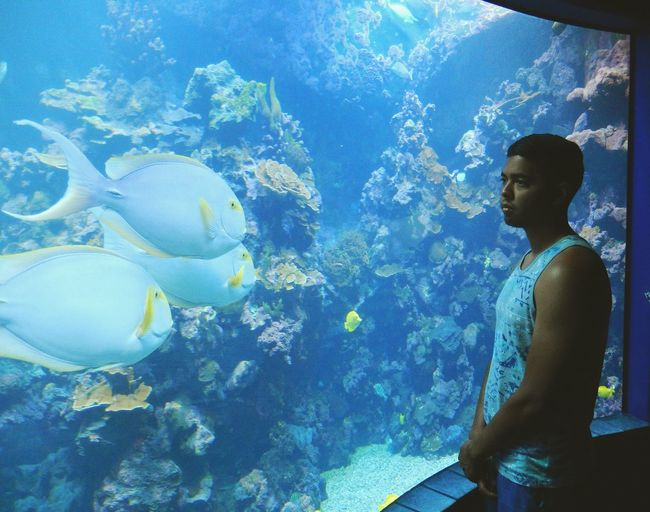 Scenics Water Blue Animal Themes Sea Swimming Fish Underwater Nature Beauty In Nature Vacations UnderSea Reef Tranquility Tourism Exploration Large Physical Geography Scenics Aquarium Explorations Young Man Staring Contest Android Photography S7 Edge Photography