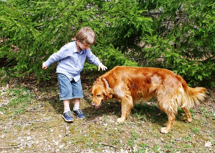Dog Pets Domestic Animals One Animal One Person Children Only Casual Clothing Golden Retriever Child People Animal Full Length Childhood Animal Themes Blond Hair Day One Boy Only Grass Outdoors Mammal Boy And Dog Perspectives On Nature