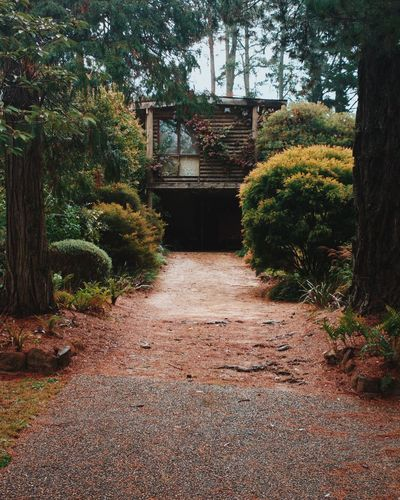 Log house in the woods. Log Architecture House Building Log Cabin Log House Woods Forest Style Exterior Australia Aussie Blue Mountains Trees Beautiful Check This Out