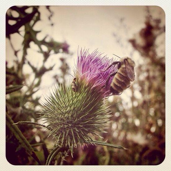 Outdoors Bee Plants Instagram