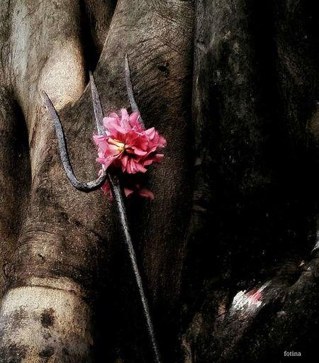 India Tamilnadu Shiva Vishnu Temple Holy Tree Holy Place Hinduism