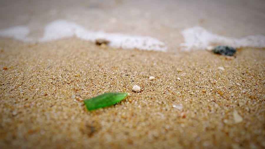 Beach macro HongKong Discoverhongkong Leica Leicaq Macro Beachphotography EyeEm Best Edits EyeEm Nature Lover Eye4photography  Hello World Walking Around Island Nature Hkiger Pmg_hok