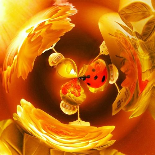 Planetical appPoisoned_pics_photography Picoftheday Tinyplanet Photoshop Jessicapopham Jessicaann Nightlights Ladybugs Worlds Dailyfeature