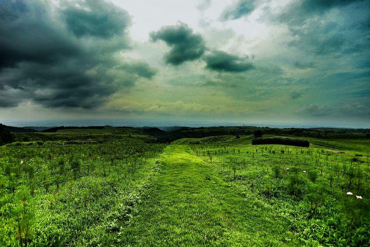 Edge Of The World ヒゴタイ公園!(*^^)/ 空へ続く緑の道♪(*´︶`*)✿ EyeEm Best Shots - Nature EyeEm Nature Lover EyeEm Best Shots EyeEm Best Shots - My Best Shot Japanese  EyeEm Best Edits Green Road Green Sky And Clouds