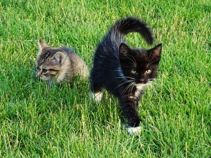 Kittens Colors