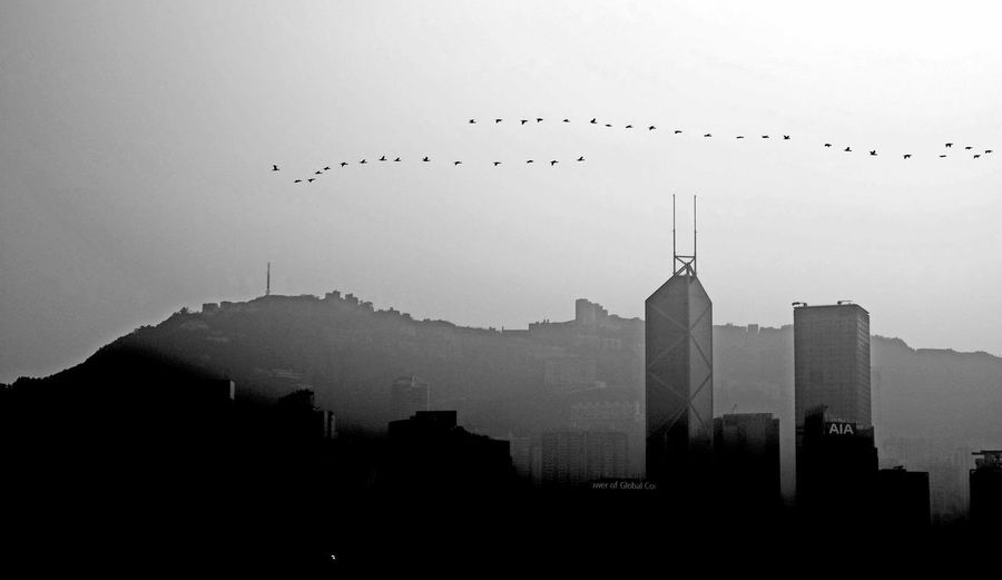 Silhouette birds flying in city against sky