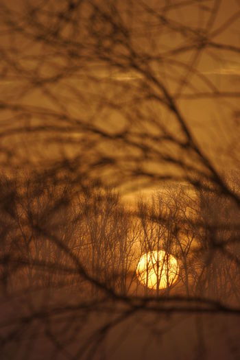 Close-up of bare trees against sunset sky