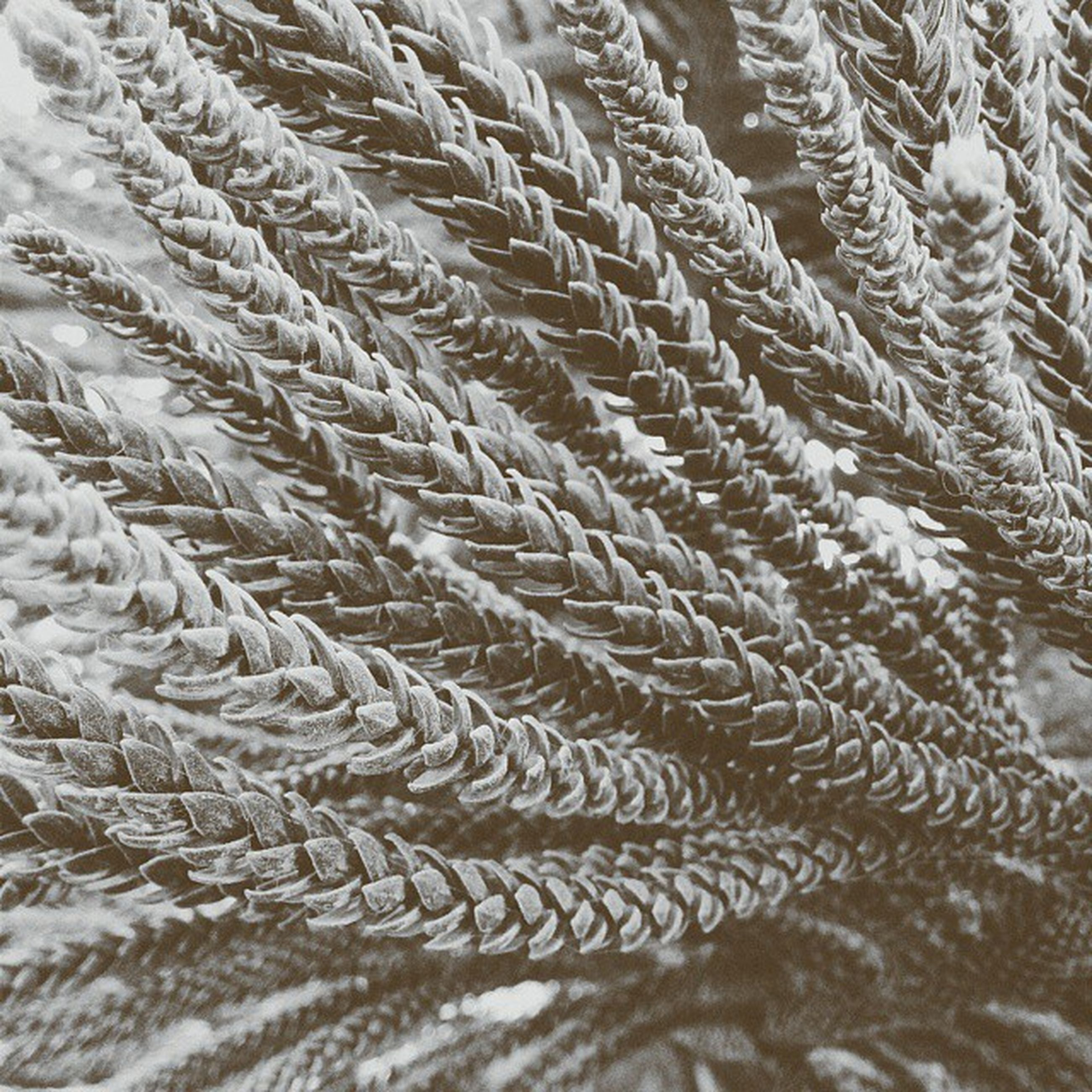 full frame, backgrounds, close-up, water, nature, pattern, cold temperature, winter, snow, day, textured, outdoors, no people, strength, natural pattern, rope, high angle view, tranquility, waterfront, rippled