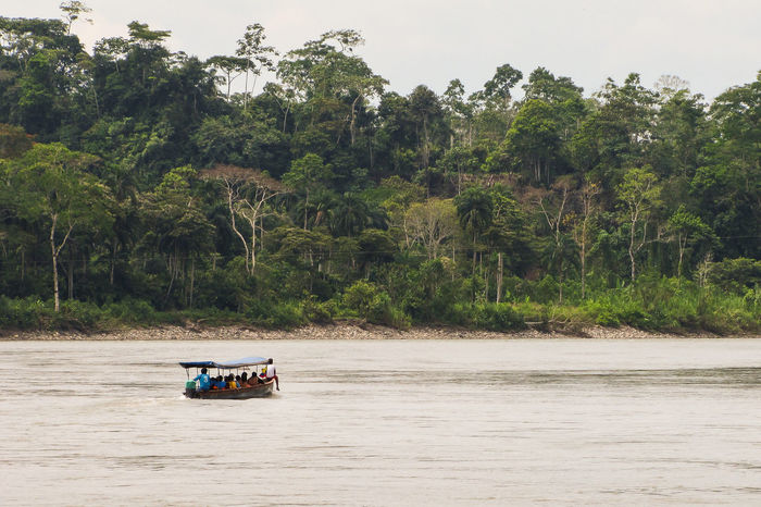 Amazonas Tourist Attraction  Travel Amazonia Amazonian Forest Beauty In Nature Boat Day Growth Jungle Misahualli Mode Of Transport Nature Nautical Vessel No People Outdoors Palm Tree River Scenics Sky Southamerica Transportation Tree Water