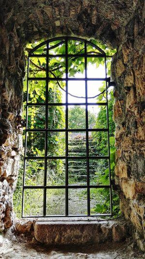 Kinizsi Castle No People Tree Window Greenhouse Metal Grate Close-up Architecture Sky Built Structure