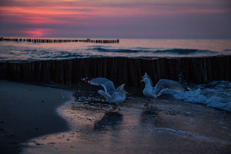 Seagulls Ostsee Strand Sea And Sky Sea Ostseeküste Sea View Twylight Sunset Sundown Market Reviewers' Top Picks
