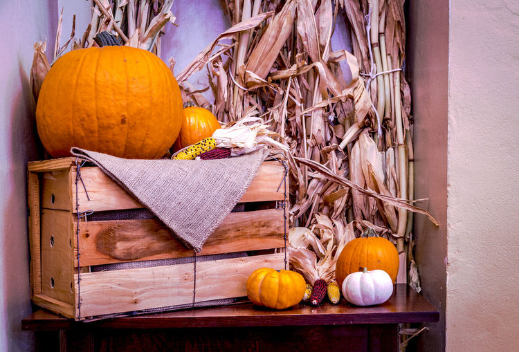 Thanksgiving theme of pumpkins Thanksgiving Autumn Close-up Day Food Freshness Fruit Gourd Halloween Indoors  Leaf No People Pumpkin Wood - Material