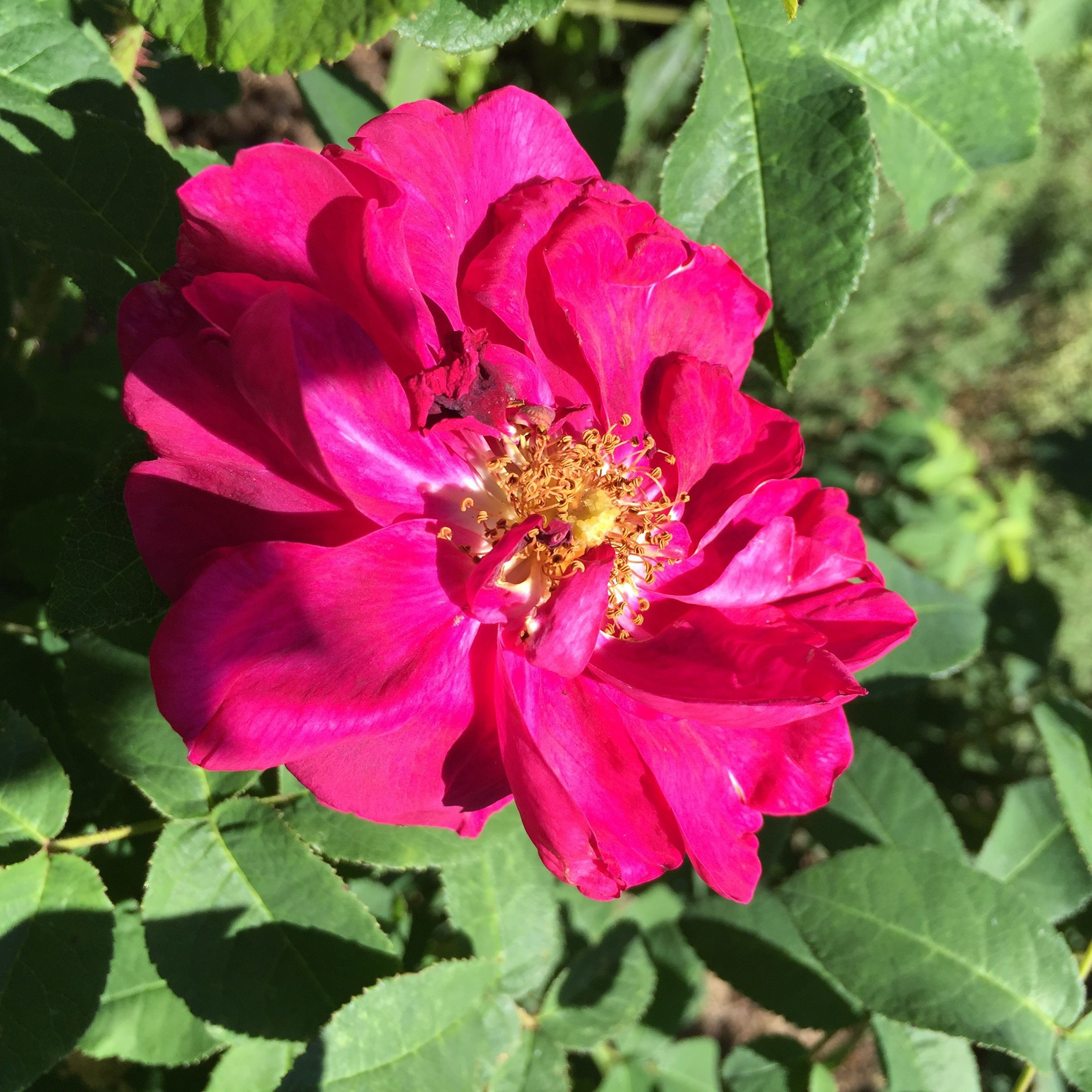 flower, petal, nature, plant, growth, fragility, beauty in nature, flower head, leaf, no people, wild rose, outdoors, day, one animal, freshness, blooming, close-up, animal themes, zinnia