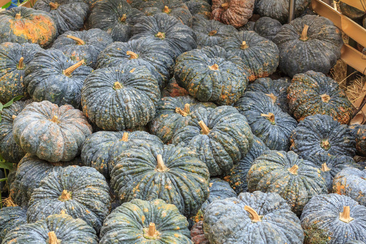 High angle view of pumpkins in market