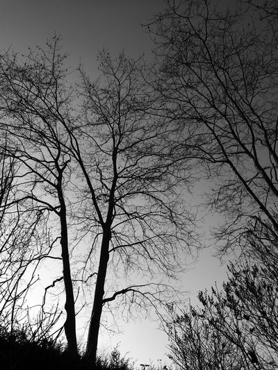 Tree Nature No People Sky Low Angle ViewOutdoors Silhouette Day Beauty In Nature