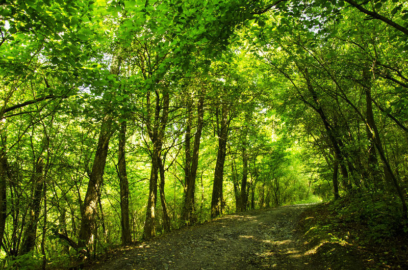 Beauty In Nature Forest Forest Path Forest Photography Forestwalk Green Color Growth Nature Nature Nature_collection Nature Lover Nature Photography Nature's Diversities Nature_ Collection  Nature_collection Nature_perfection Naturelovers Naturephotography Natures Diversities The Way Forward Tree WoodLand