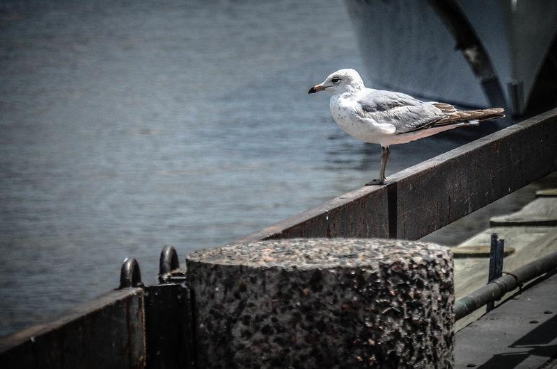 Bird perching on pier