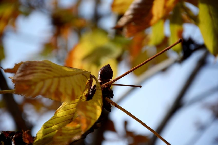 Nature Autumn Colors Autumn Bellota City Landscape Focus Object Contrast Details City Details Day Tree Focus On Foreground Nature Close-up No People Branch Perching