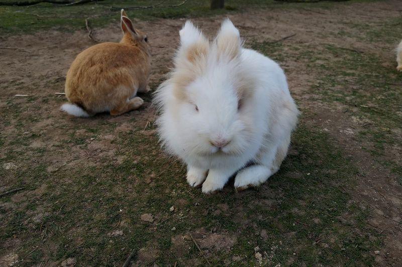 Rabbits No