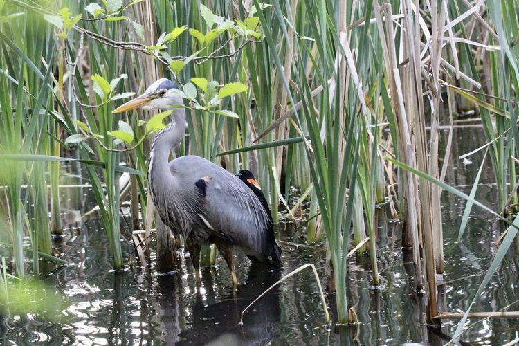 Bird perching on grass in lake