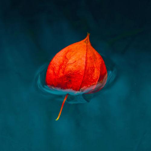 Close-up of orange leaf floating on water