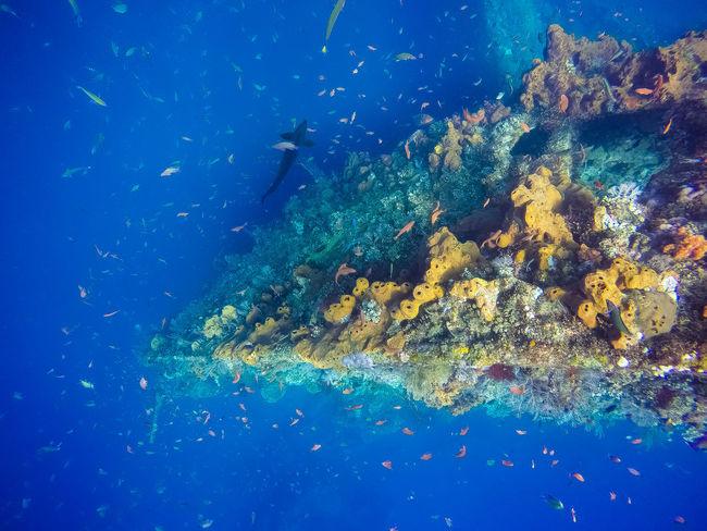 Bali Diving Tulamben Usatlibertyshipwrecksite Ussliberty Wreckdiving