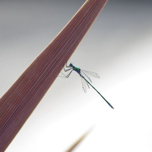 Low angle view of damselfly on plant against sky