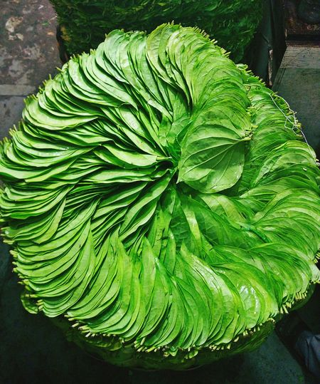 Leaf Green Color High Angle View Nature No People Plant Freshness Artupyourlife Sk2017 Sceneshots Outdoors Growth Groceries Green Green Color Betel Leaf Market EyeEmNewHere