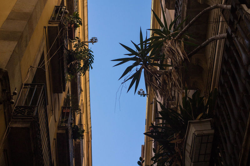 Catalonia Catalunya Plants SPAIN Architecture Blue Sky Building Exterior Built Structure Clear Sky Day Drying Narrow Street No People Outdoors Palm Tree Plants And Flowers Plants On The Wall Sky