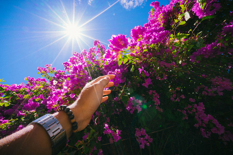 Low angle view of pink flowering plant against bright sun