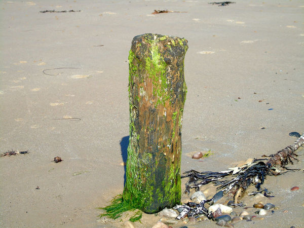 That's no Moon!!...It's piece of wood sticking out of the sand! Beach Beach Day Beach Photography Beaches Beaches Of Eyeem Beachphotography Day Eye Em Beaches Eye Em Scotland Green Color Moss Nature No People Outdoor Outdoor Photography Outdoors Rocks Sand Scotland Tranquility Uk Walks On The Beach  Weathered Wooden Wooden Post