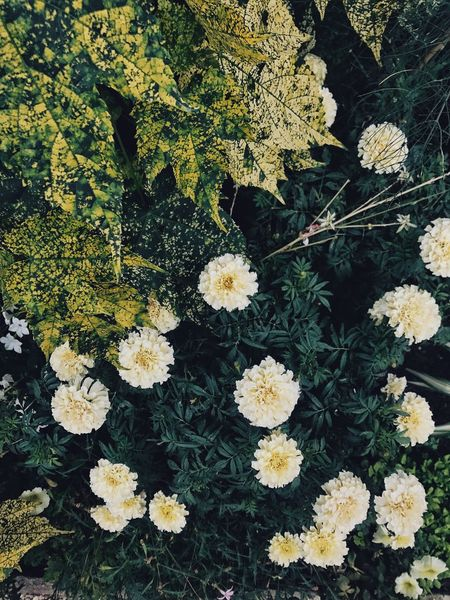 Natures wallpaper. Pattern Pattern, Texture, Shape And Form Textures and Surfaces Walpaper Botany Green Plant Growth Beauty In Nature Full Frame Flower Nature High Angle View Flowering Plant Backgrounds Fragility Green Color Vulnerability  Freshness Plant Part Leaf