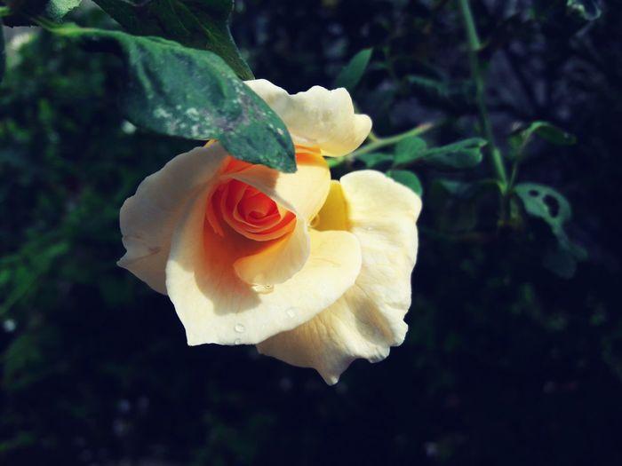 Flowers are always very beautiful.. First Eyeem Photo