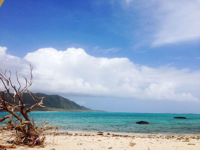 Driftwood On Beach Against Cloudy Sky