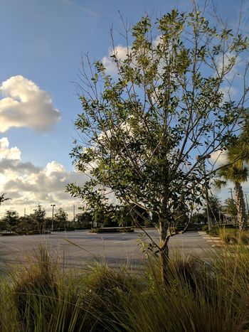 Tree Nature Sky Cloud - Sky No People Beauty In Nature Growth Outdoors Tranquility Day Landscape Scenics Grass Fragility Freshness EyeEmNewHere