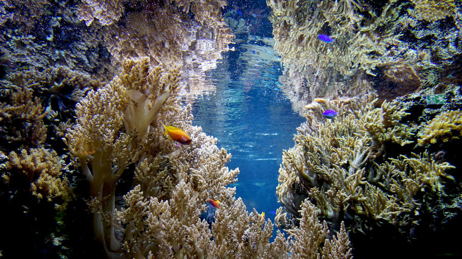 little fish between corals Aquarium Underwater Sea UnderSea Water Coral Sea Life Invertebrate Animal Wildlife Animals In The Wild Marine Animal Nature Swimming Animal Themes No People Beauty In Nature Day Outdoors Group Of Animals