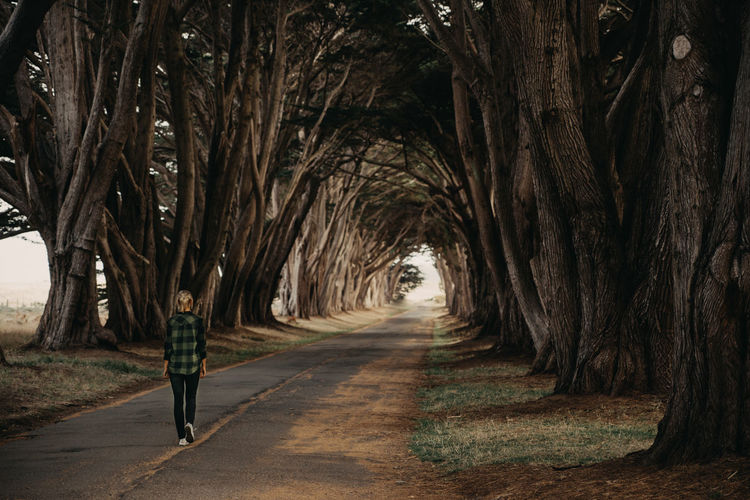 Tree Tunnel Cypress Tree Cypress Tree Tunnel California Tree One Person Full Length Plant Direction The Way Forward Rear View Real People Walking Tree Trunk Nature Trunk Transportation Road Lifestyles Day Casual Clothing Standing Outdoors Growth Diminishing Perspective Treelined Sunset