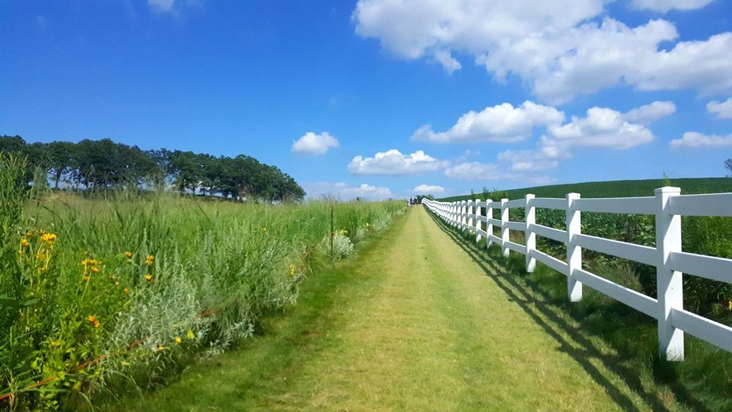 Farm Farm Life Nature Nature_collection Nature Photography Naturelovers Fresh Air And Sunshine